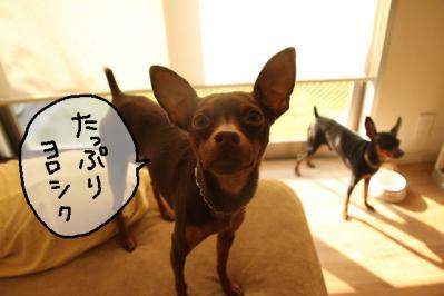 2011_11_04_9999_8.jpg