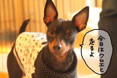 2011_11_06_9999_15.jpg