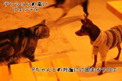 2011_11_06_9999_39.jpg