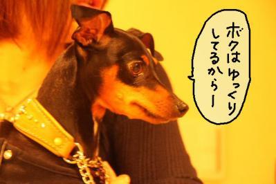2011_11_06_9999_46.jpg