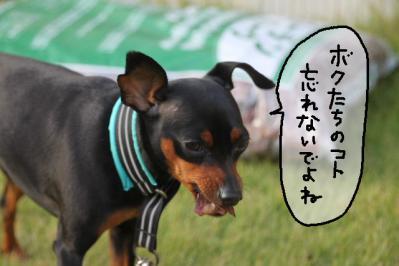 2011_11_20_9999_6.jpg