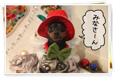 2011_11_23_9999_180.jpg
