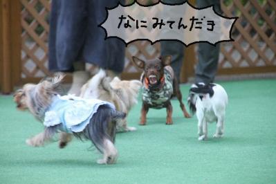 2011_11_23_9999_265.jpg