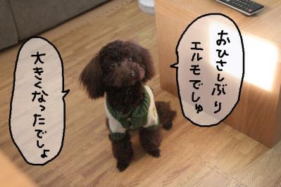 2011_11_23_9999_37.jpg