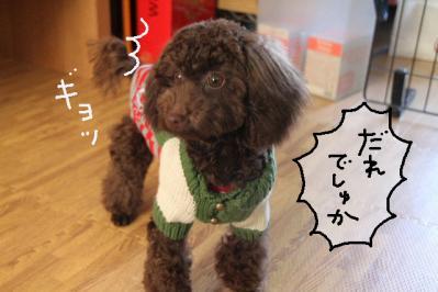 2011_11_23_9999_75.jpg