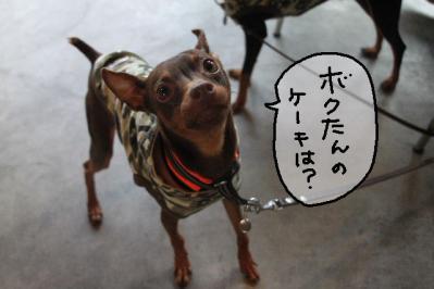 2011_11_23_9999_88.jpg