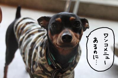 2011_11_23_9999_97.jpg