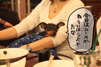 2011_12_04_9999_190.jpg
