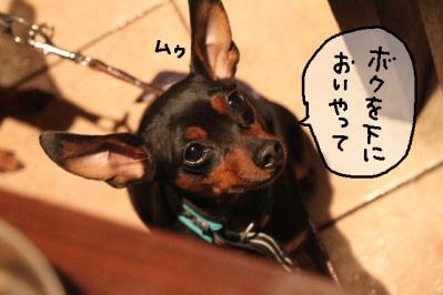 2011_12_04_9999_219.jpg