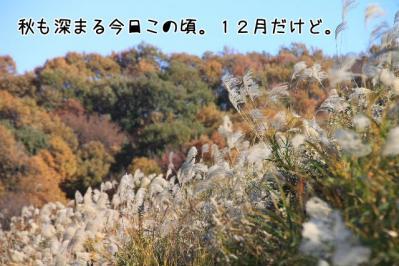 2011_12_04_9999_29.jpg