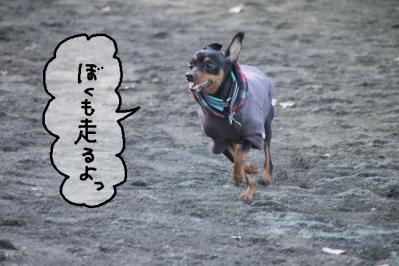 2011_12_24_9999_87.jpg