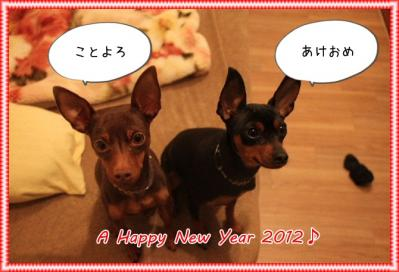 2011_12_30_9999_14.jpg