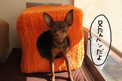 2011_12_31_9999_4.jpg
