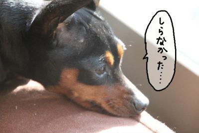 2012_01_06_9999_37.jpg