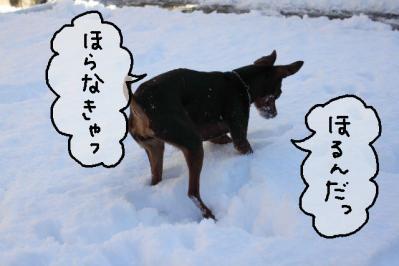 2012_01_24_9999_53.jpg
