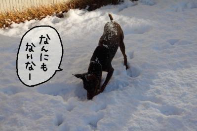 2012_01_24_9999_65.jpg