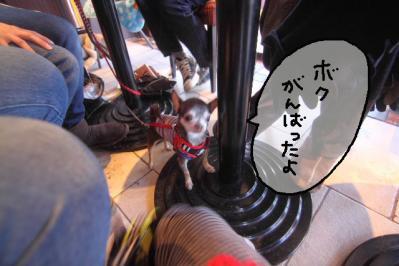 2012_01_29_9999_13.jpg