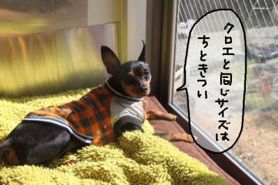 2012_01_30_9999_14.jpg
