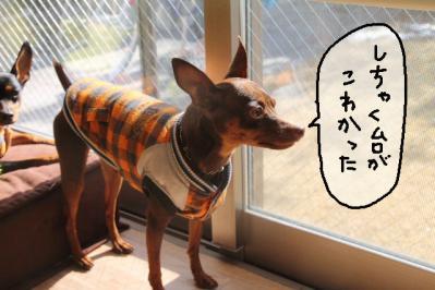 2012_01_30_9999.jpg