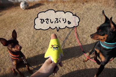 2012_02_09_9999_13.jpg
