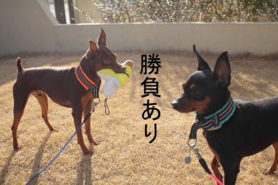 2012_02_09_9999_46.jpg