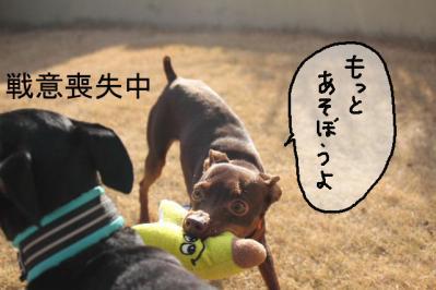 2012_02_09_9999_56.jpg