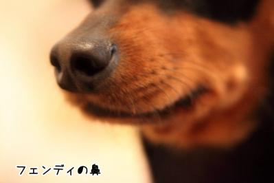 2012_02_15_9999_43.jpg