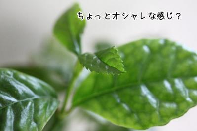2012_02_15_9999_9.jpg