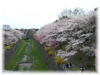 昭和記念公園1-12