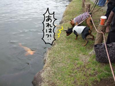 昭和記念公園1-13