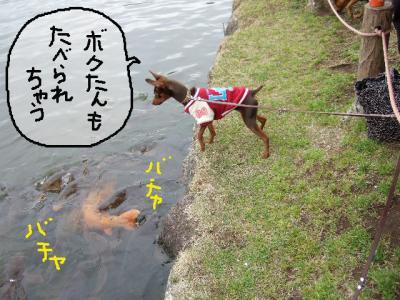 昭和記念公園1-14
