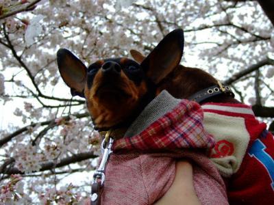 昭和記念公園2-10