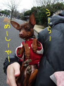 昭和記念公園2-11