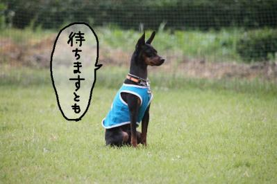 御殿場トライアル20