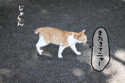 20100917-足柄10