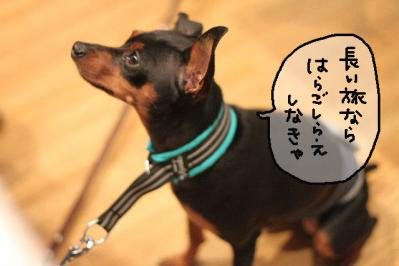 20100917-足柄8
