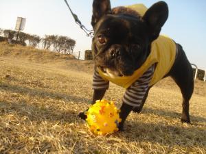 ボール遊びでち!!