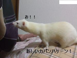 DSCF6726.jpg