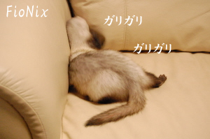 DSC_0482a.jpg