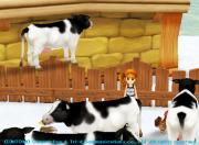 柵に登る牛
