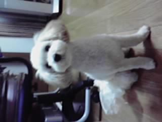 桑久保 犬1