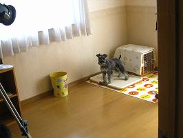 20090305_19.jpg