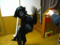 20090313_13.jpg