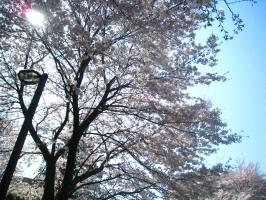 20090407_31.jpg