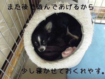 **りん日記**
