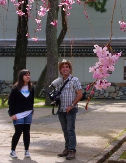 名古屋城の桜-6