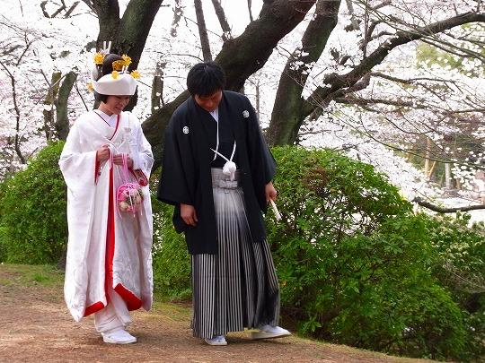 名古屋城の桜-5