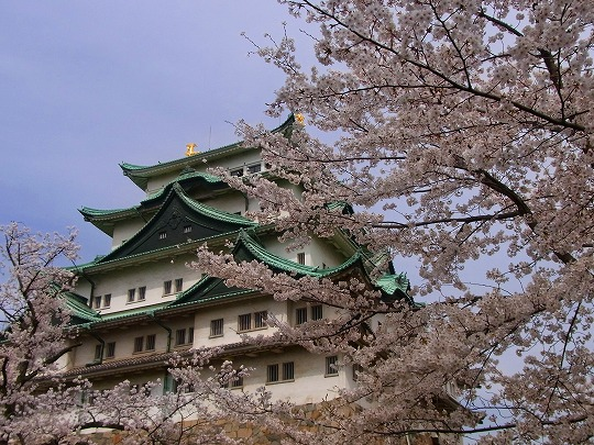 名古屋城の桜-1