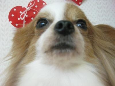 2010_0226_moka.jpg