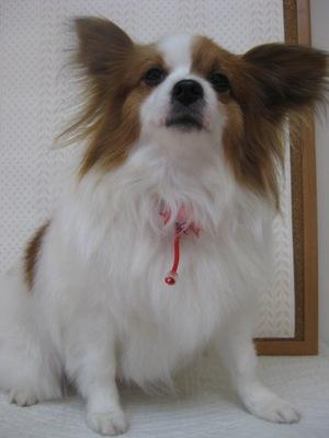 2010_0314_riryi.jpg